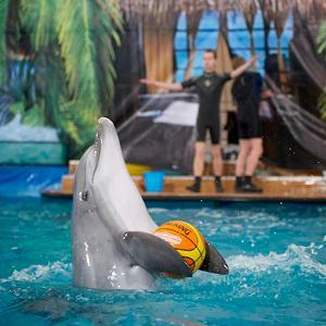 Дельфинарии, океанариумы Волгореченска