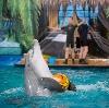 Дельфинарии, океанариумы в Волгореченске