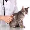Ветеринарные клиники в Волгореченске